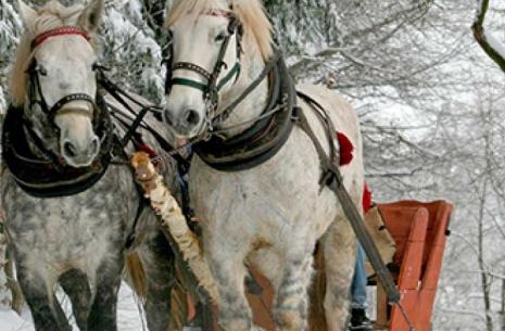 la metaphore d'une caleche et de chevaux en hypnose